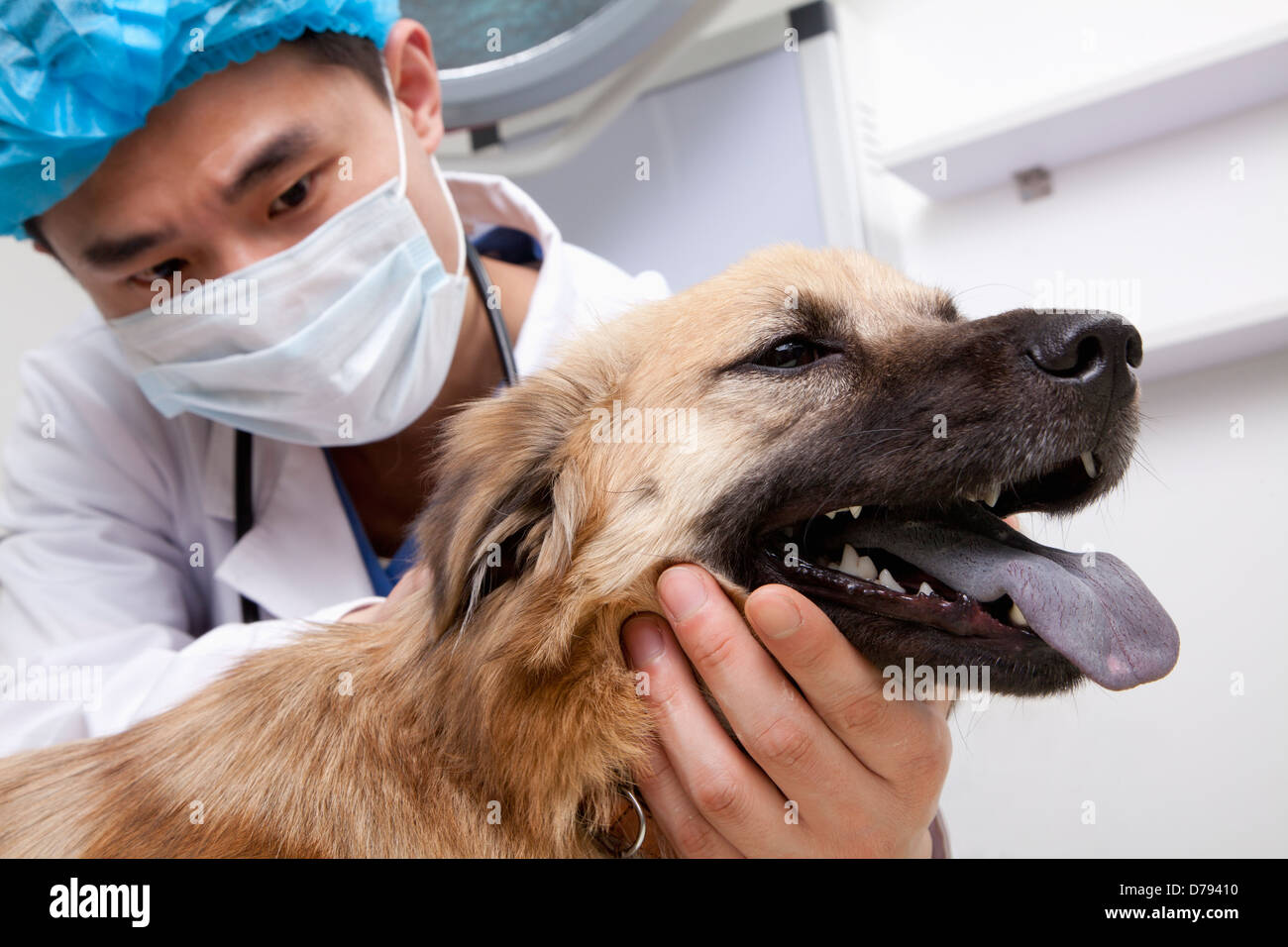 Veterinarian with dog in examination room - Stock Image