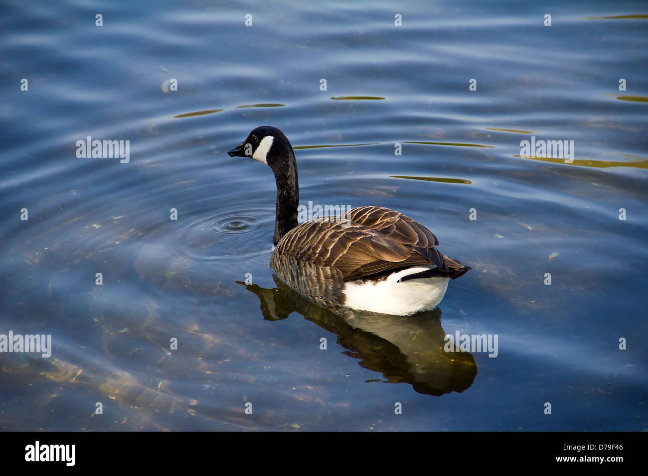 canada goose sale at sail