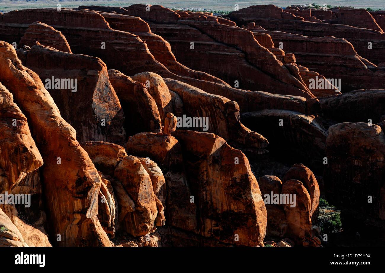sandstone fins devils garden section arches national park moab Utah carved rock desert scenery scenic - Stock Image