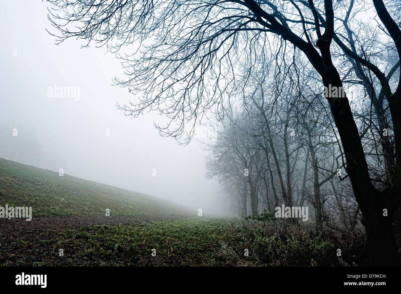 Fog in the Elbufer in Kirchwerder, 4 and marshy land, Hamburg, Germany, Europe Stock Photo