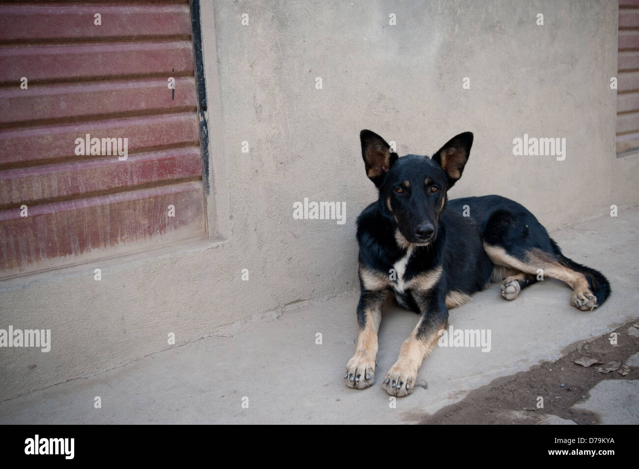 Dog resting in the slums of Bolivia - Stock Image