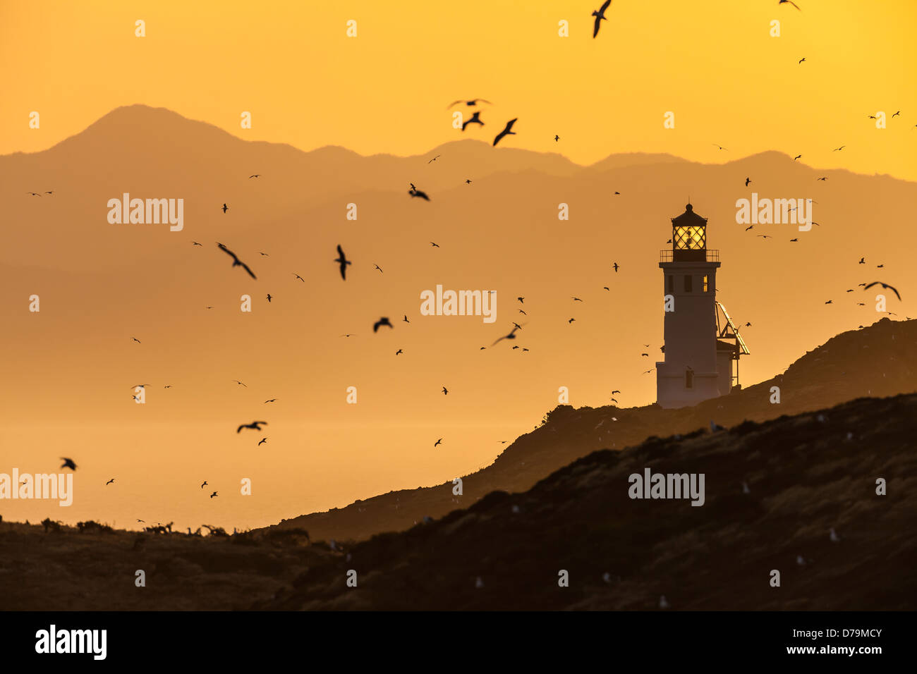 Anacapa Island Light Station at sunrise, with California mainland distant and Western Gulls in the air, Channel - Stock Image