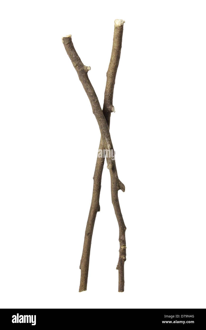 Twigs - Stock Image