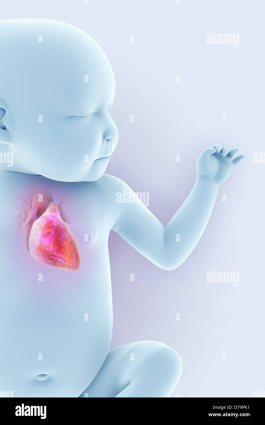 Newborn Anatomy - Stock Image