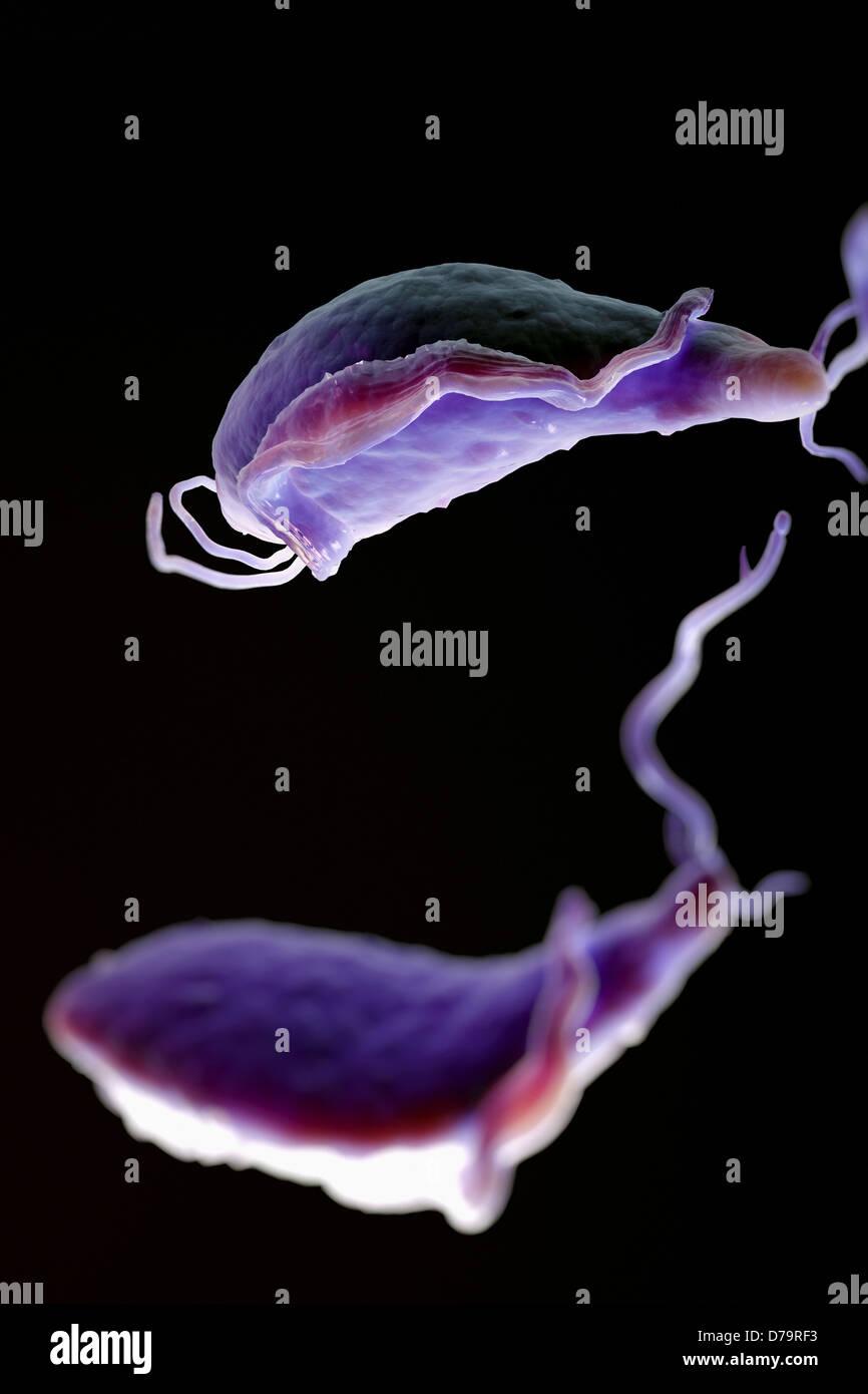 Trichomoniasis Discharge Color