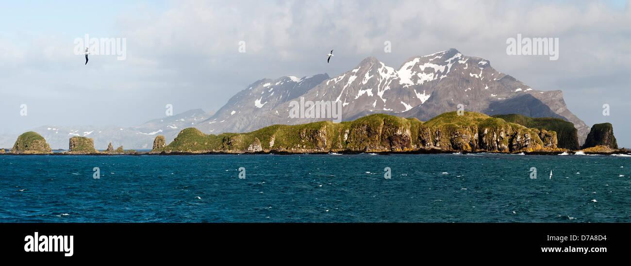 Wandering albatross Diomedea exulans flying over Bay Isles South Georgia Island Stock Photo