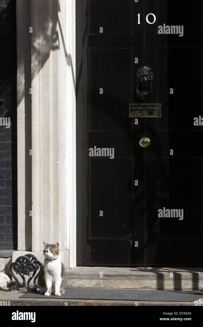 Larry the Cat,Downing Street,London - Stock Image