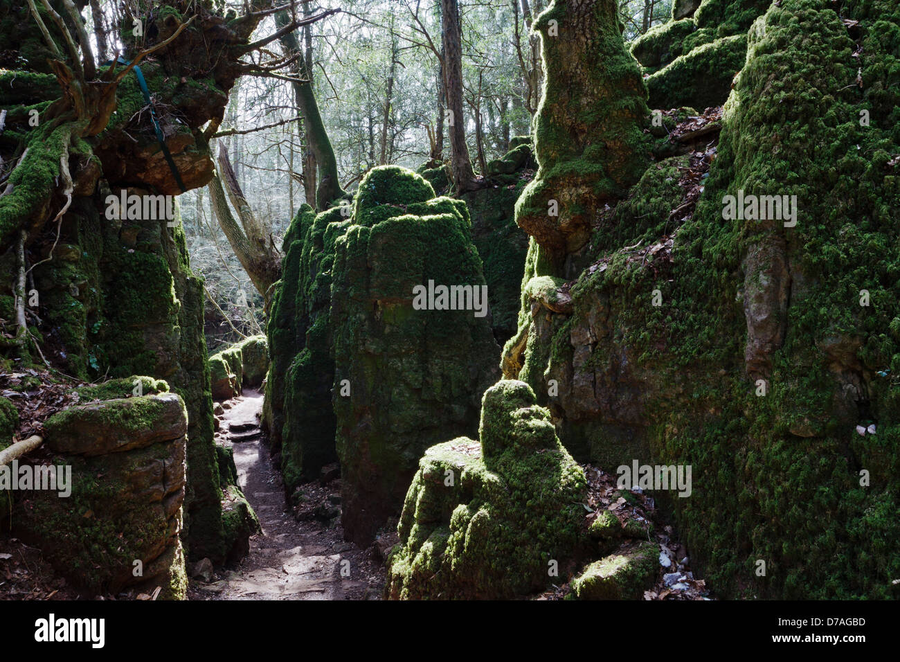 Puzzlewood Coleford Forest Of Dean Gloucestershire
