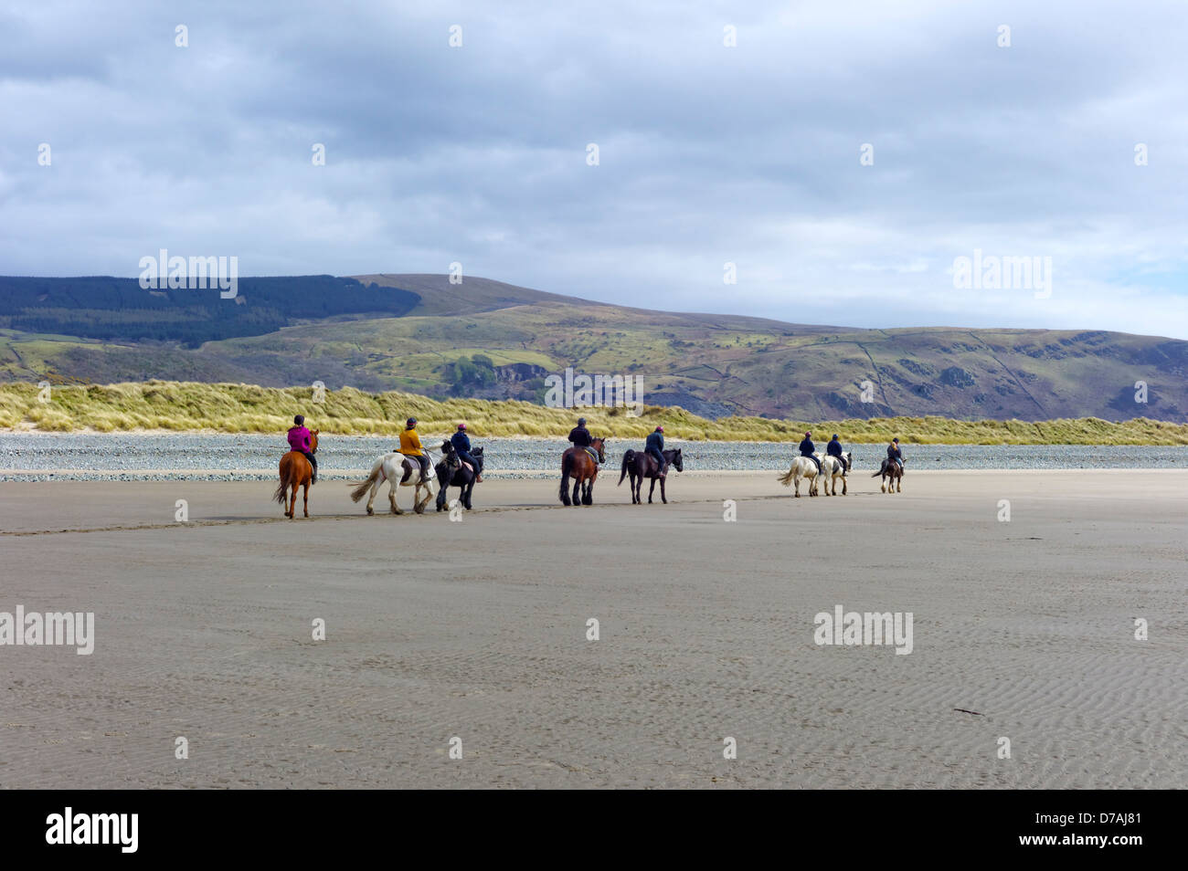 A group of horses and ponies with riders are trekking in a line on the beach with the sea and mountains in the background. - Stock Image