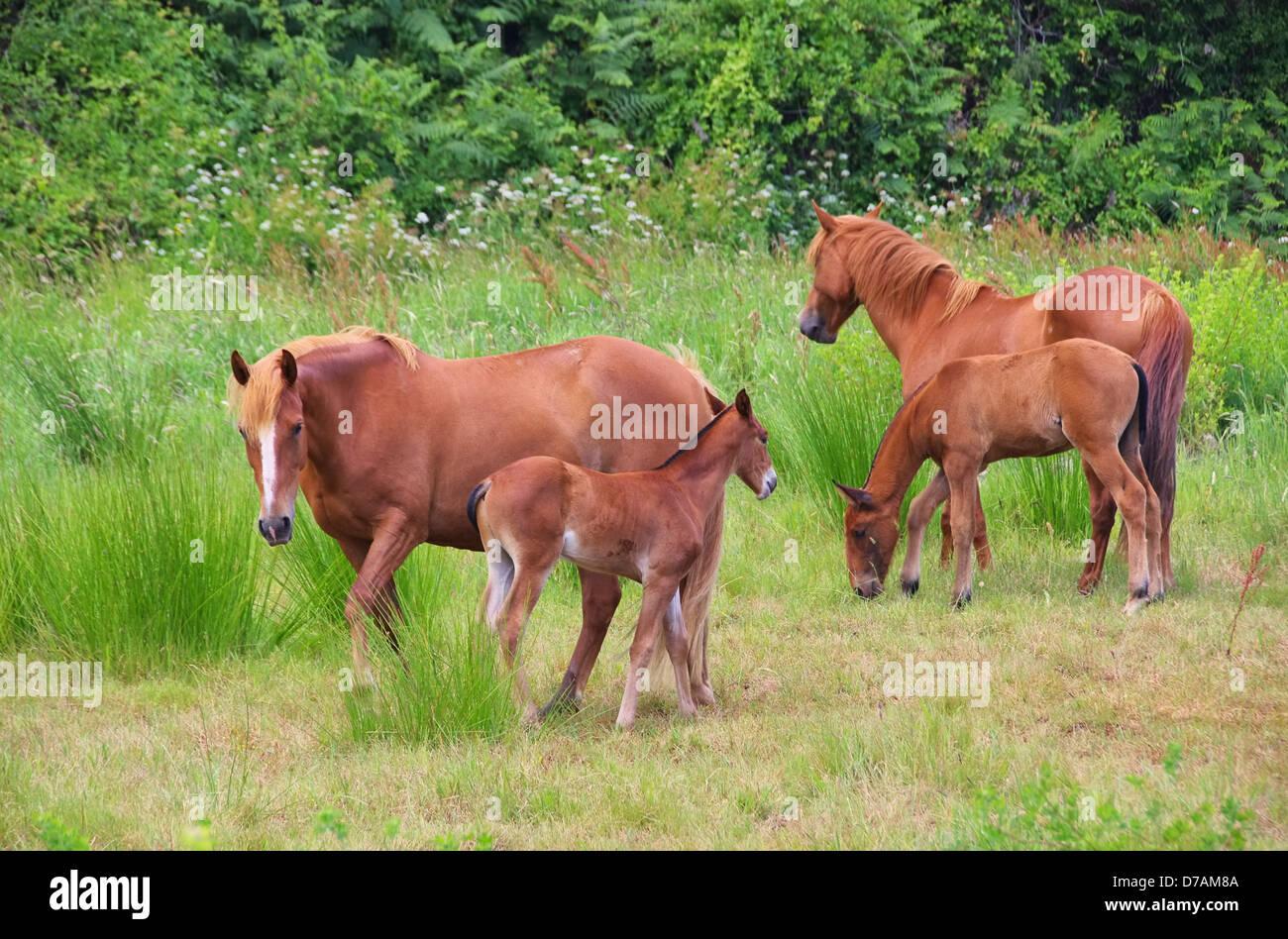 Pferd - horse 12 - Stock Image
