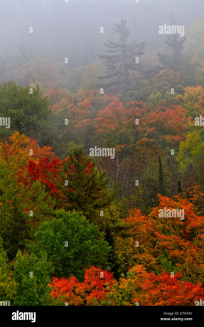 Autumn Colours In The Mist In Cottage Country; Ontario Canada - Stock Image