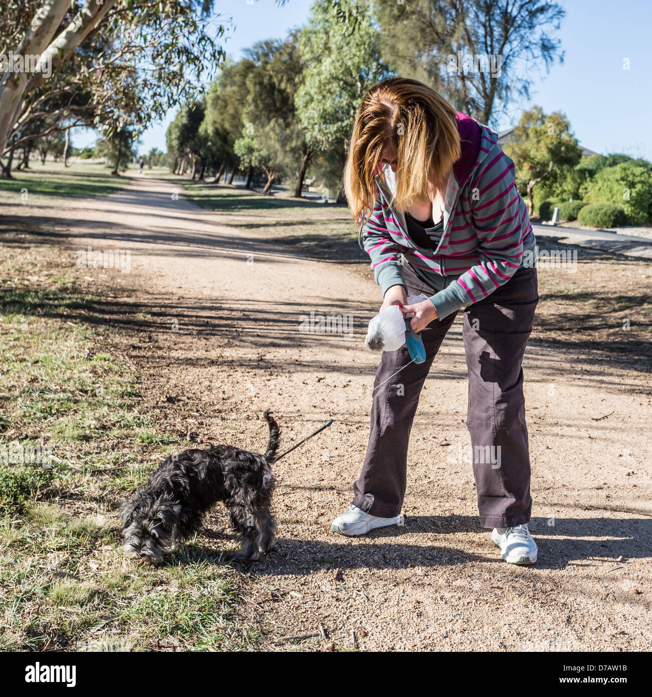 Responsible dog owner cleaning up dog droppings - Stock Image