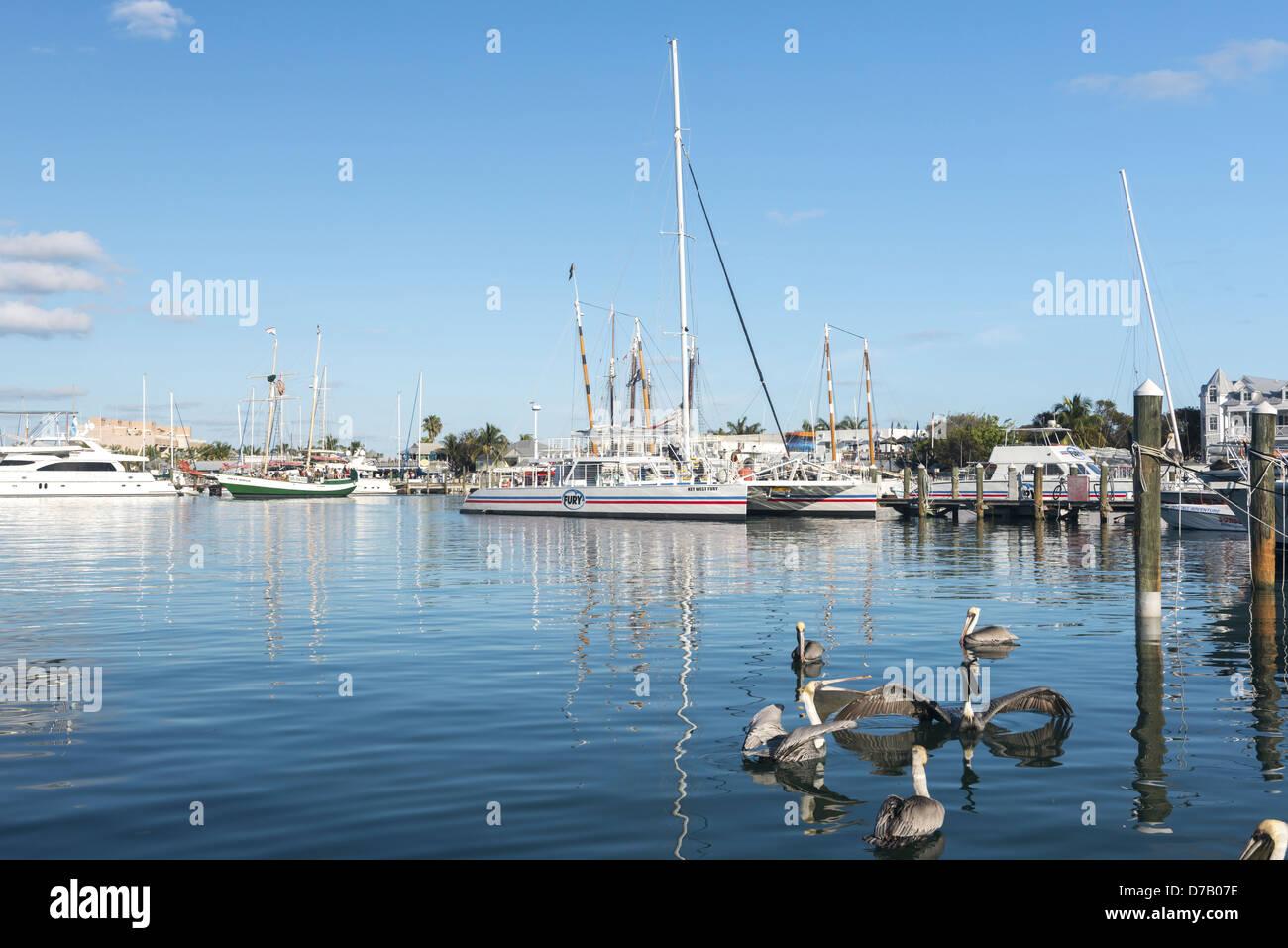 Sailing ships, Key West, Florida, USA, - Stock Image