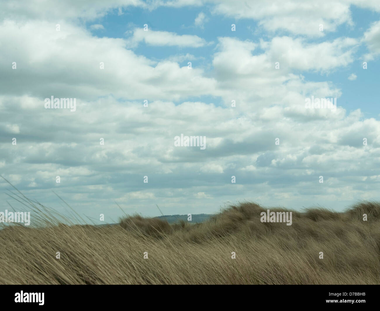 wind swept heather with cloudy sky - Stock Image