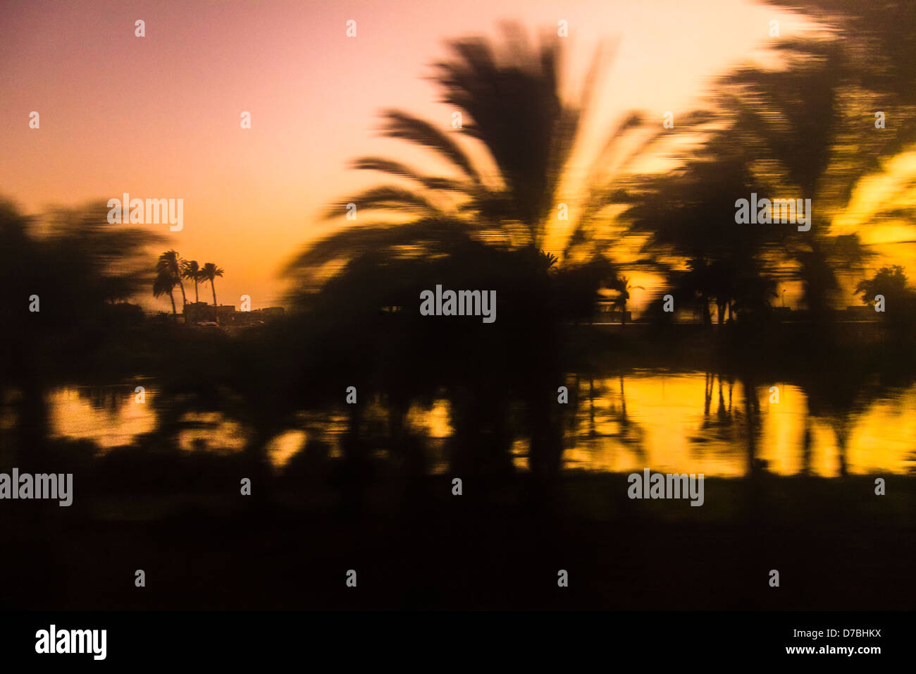 Abstract silhouette of palm grove by the river Nile at late sunset taken from a moving train. Egypt Stock Photo