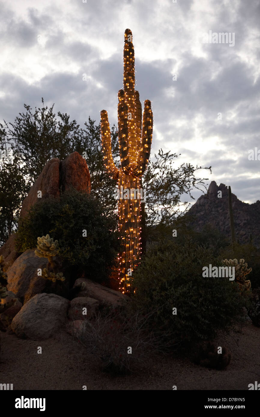 saguaro cactus decorated with holiday christmas lights stock image