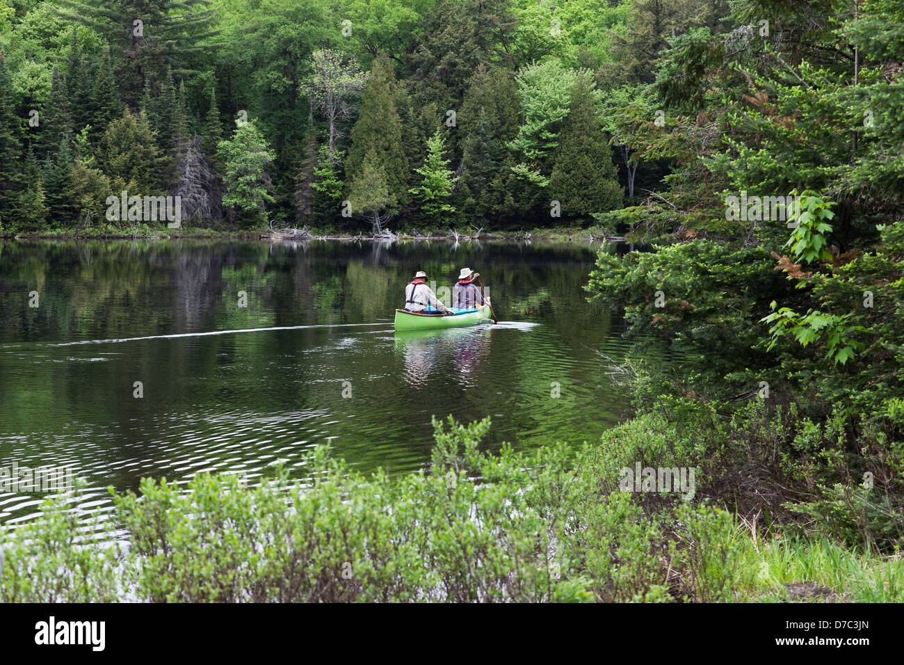 Senior Couple Canoeing In A Lush Green Bay In Spring On Smoke Lake In Algonquin Park;Ontario Canada Stock Photo