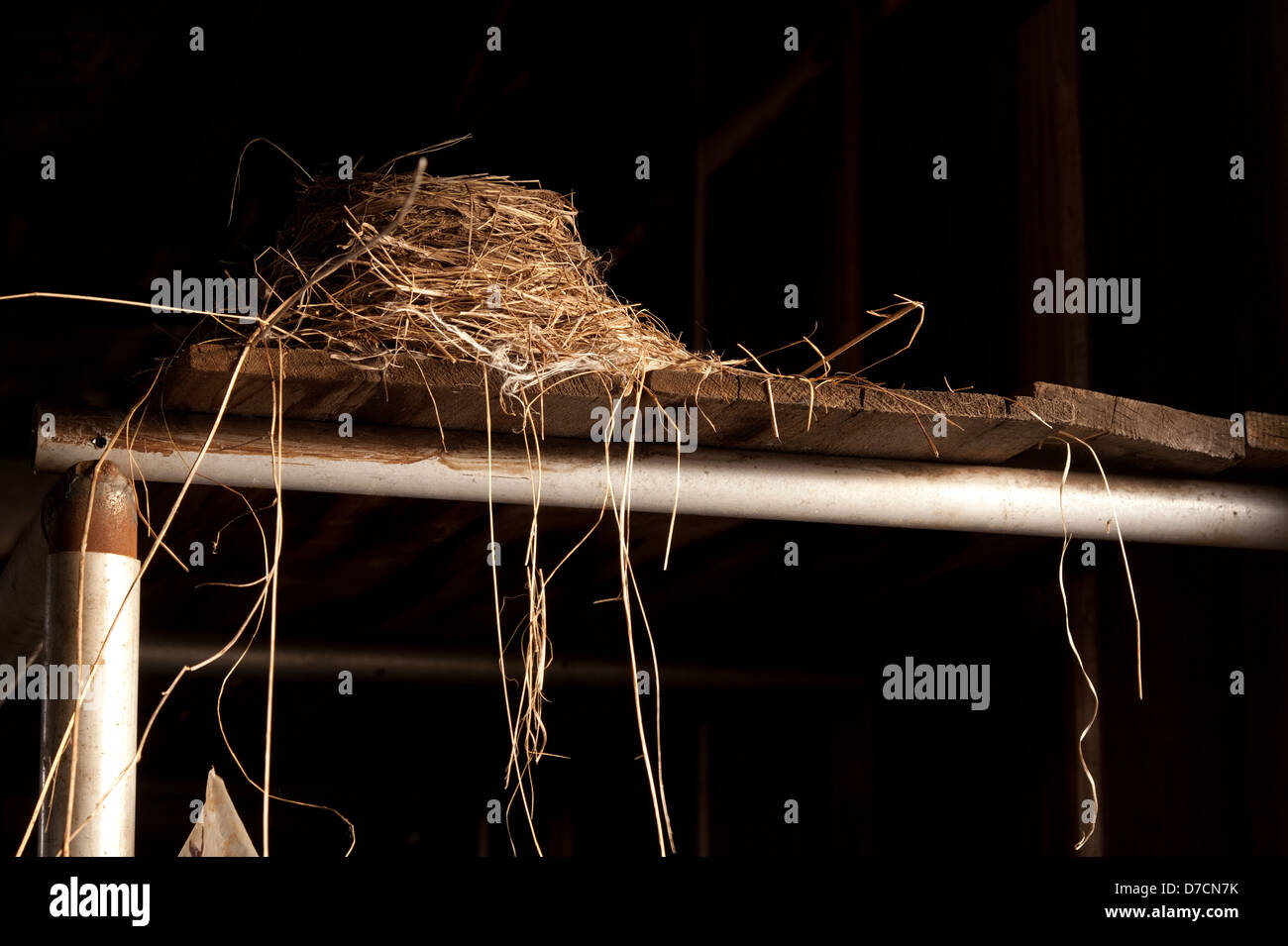 A birds nest located in a strange place. - Stock Image
