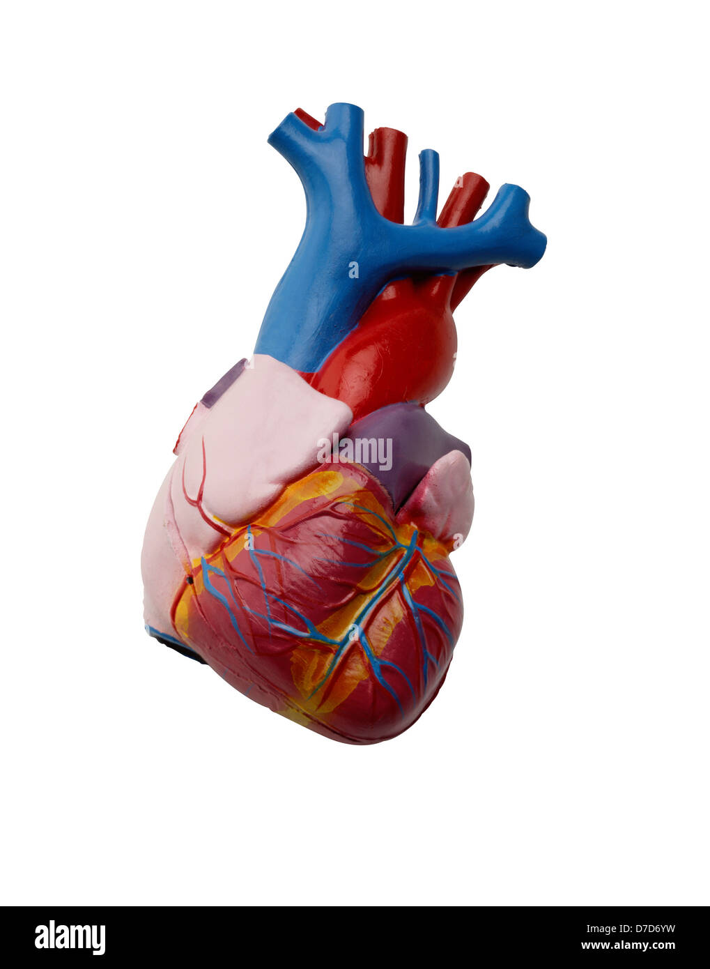 Plastic Anatomical Model Of Human Heart On White Stock Photo