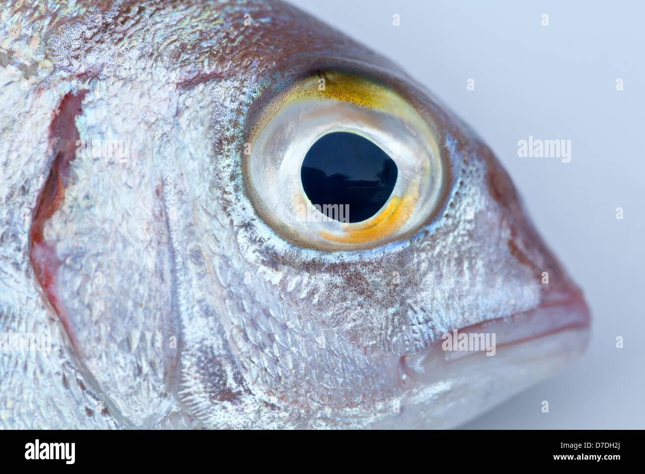 Eye of red sea bream Stock Photo