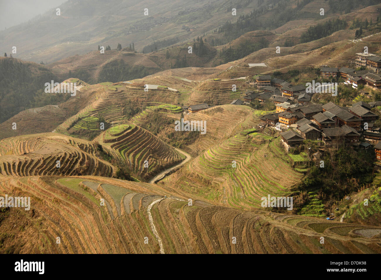 The world-famous rice terraces of Longji 'backbone of the dragon' or 'vertebra of the dragon' and - Stock Image
