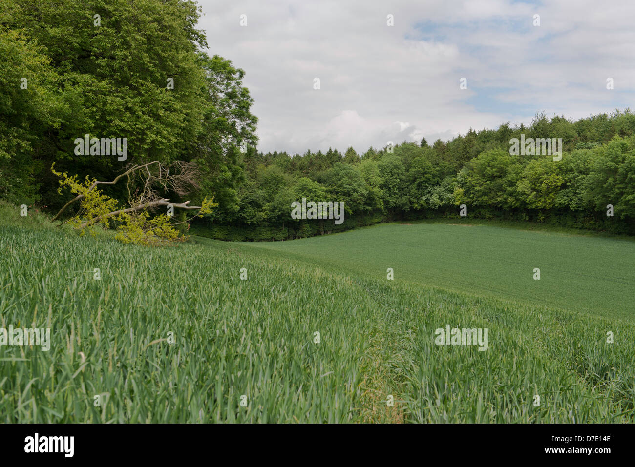 Proposed tunnel entrance site at Mantles Wood on Route of HS2 Railway London to Birmingham - Stock Image