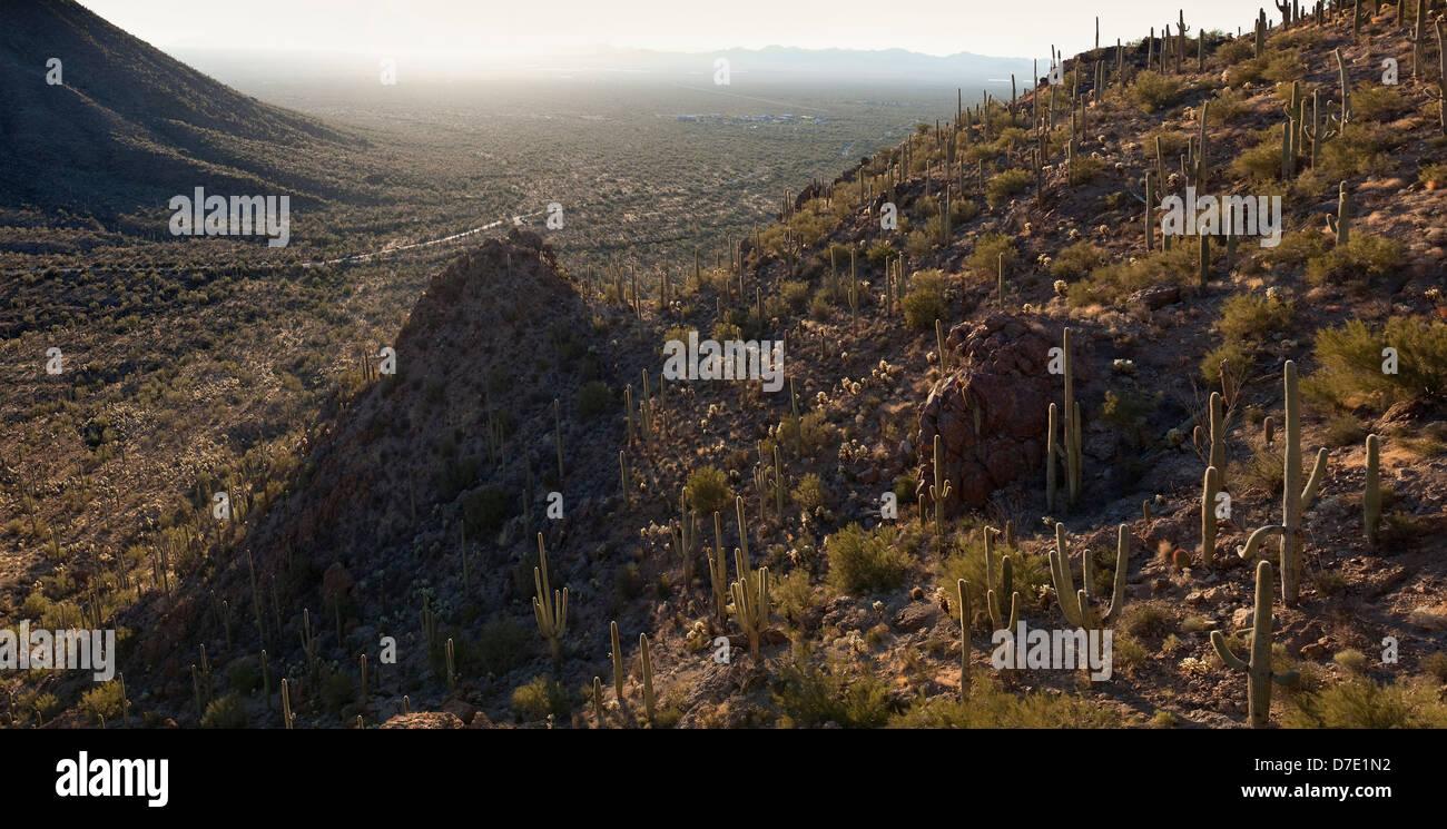 Saguaro National Park West - Stock Image