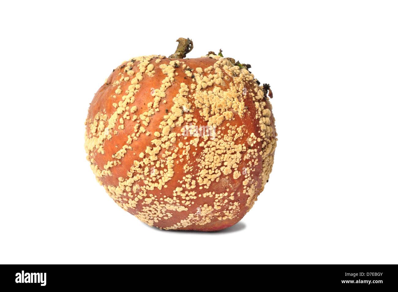 Rotten Apple On White Background - Stock Image