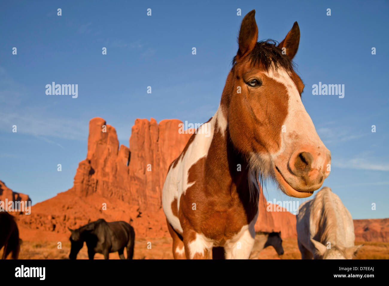 Navajo Indian horses at Monument Valley Navajo Tribal Park, United States of America, USA - Stock Image