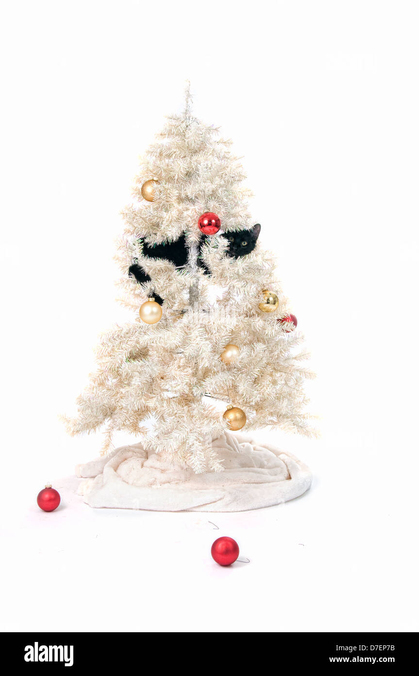 black cat in a christmas tree stock image - Black Cat Christmas Tree Decoration