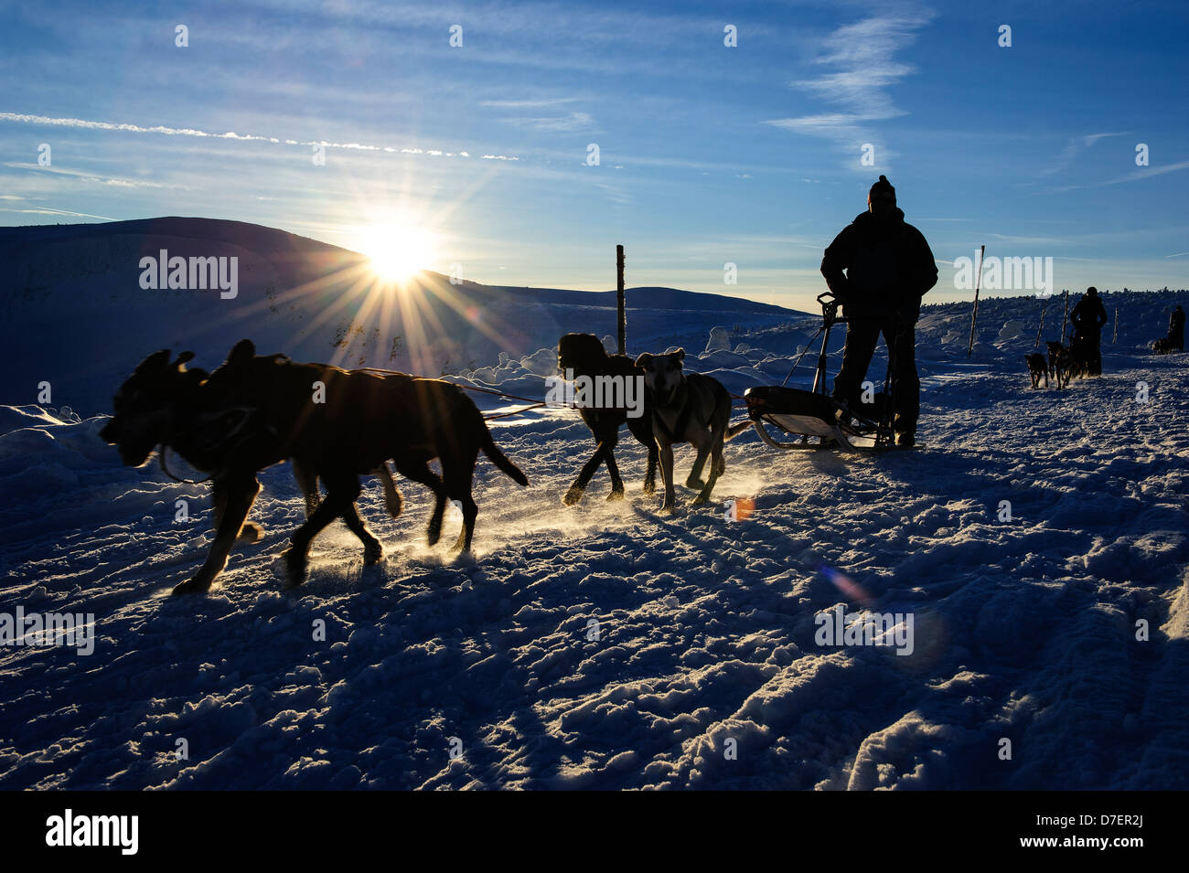 Silhouette of a dog sledge racing in the Karkonosze mountains, Poland. - Stock Image