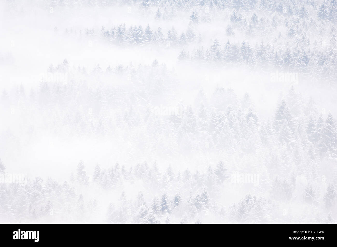 View on a snow covered pine forest in winter, with fog, Haute Savoie, France. Stock Photo