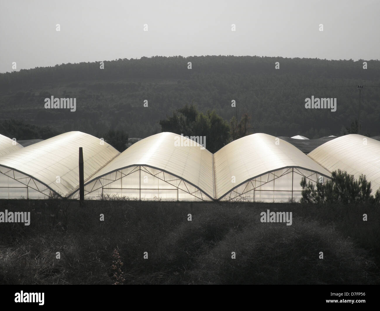 Greenhouses in Mei Ami, cooperative settlement near Wadi Ara, Israel - Stock Image