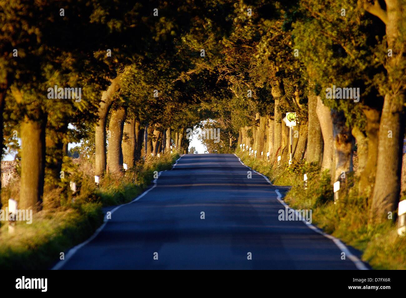 Ruegen, avenue, avenues, street, trees, Ostsee, Rügen, Allee, Alleen - Stock Image