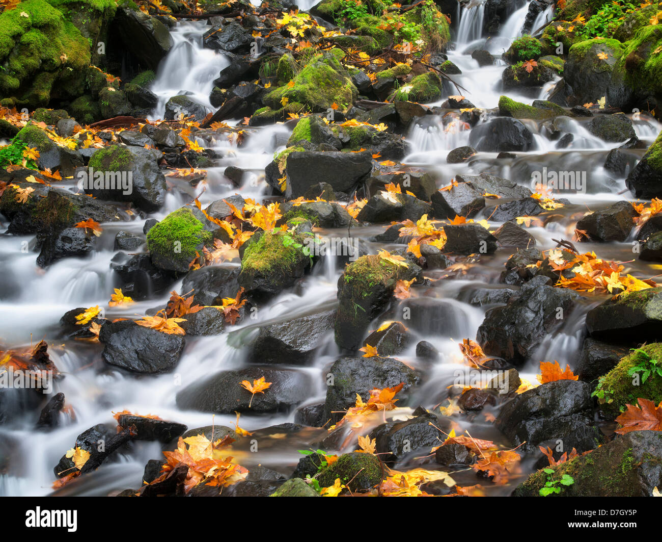 Starvation Creek with fall colors.Columbia River Gorge National Scenic Area, Oregon - Stock Image