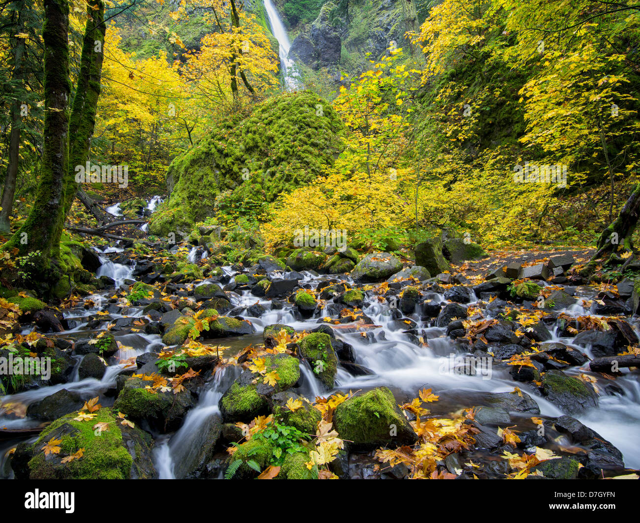 Starvation Creek and waterfalls with fall colors.Columbia River Gorge National Scenic Area, Oregon - Stock Image