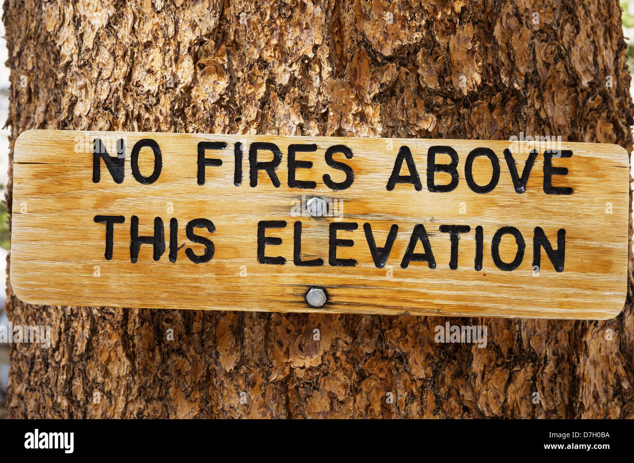 no fires above this elevation wood sign on a tree trunk - Stock Image