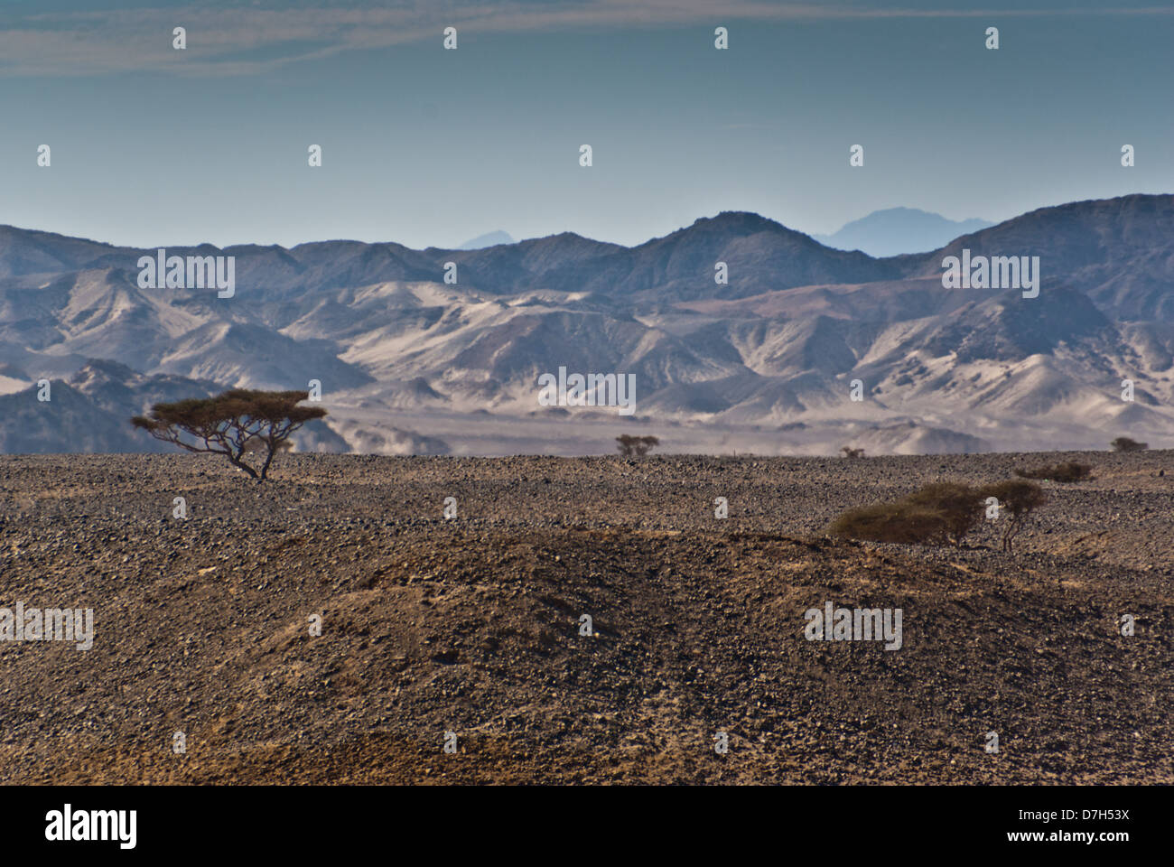 Landscape with acacias and mountains, Wadi Gamal (also spelled as Gemel, Gimal, Gemal or Jimal) National Park, Upper - Stock Image