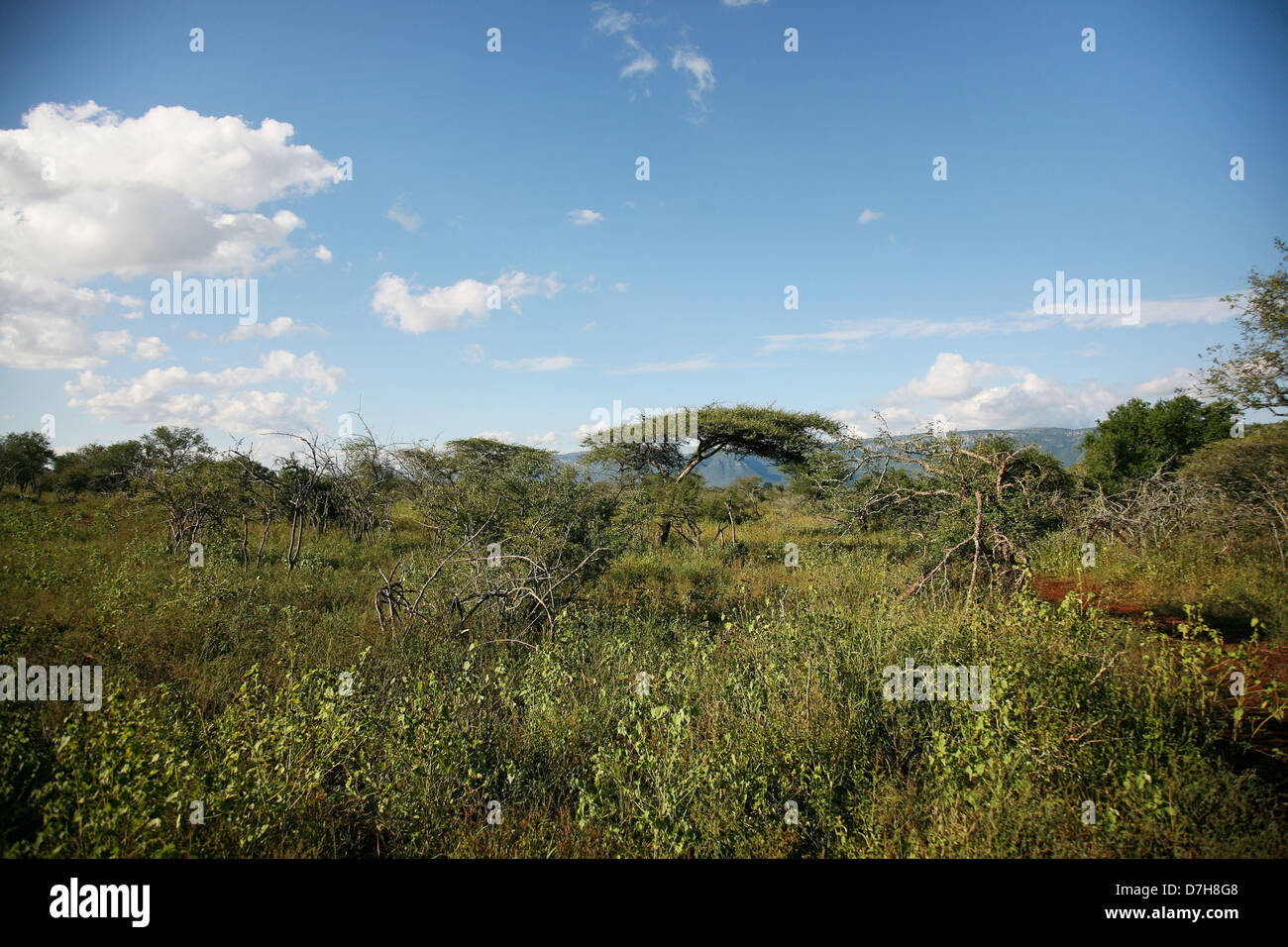 Landscape imagery of Kwazulu Natal, South Africa - Stock Image