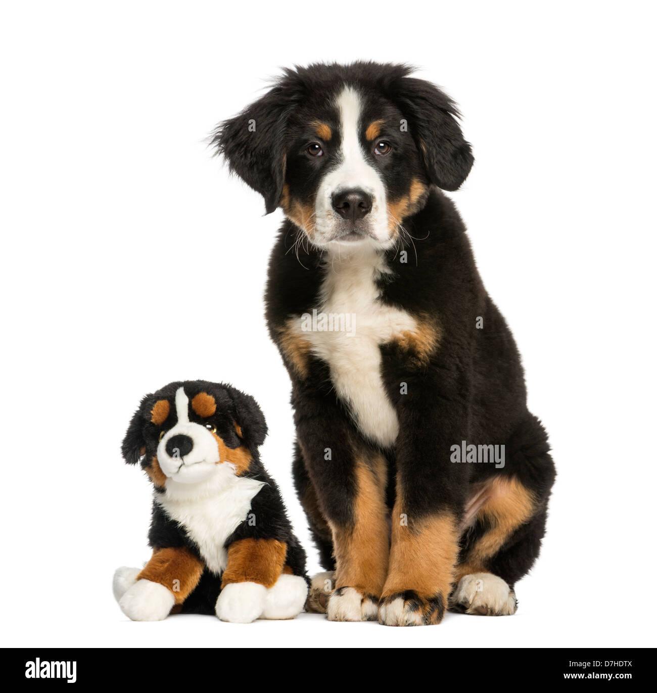 Stuffed Toy Dog Stock Photos Stuffed Toy Dog Stock Images Alamy