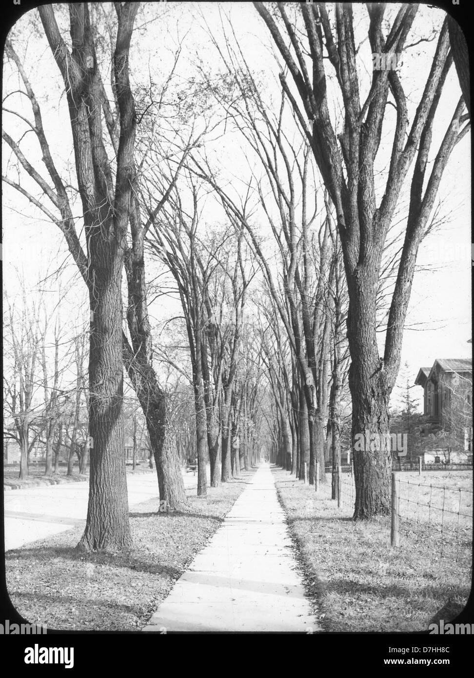 Elms n walk – Genesee St., Syracuse, NY - Stock Image