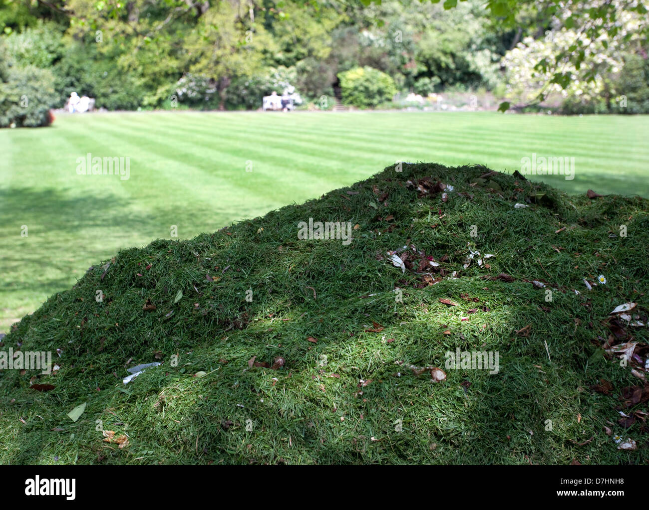 Grass cuttings and newly-mowed lawn in London park - Stock Image