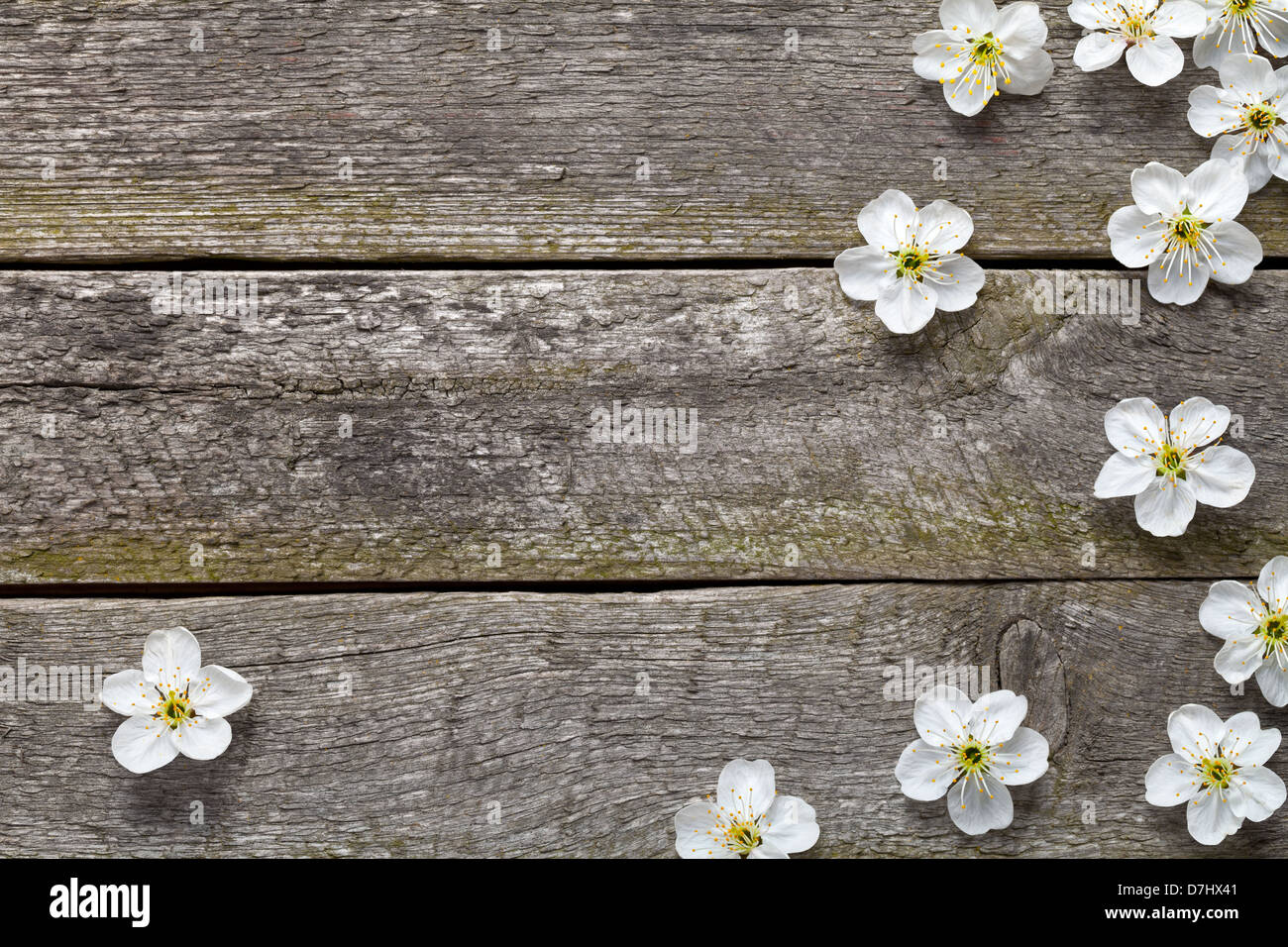 Spring Flowers On Wooden Table Cherry Blossom Top View Stock Photo