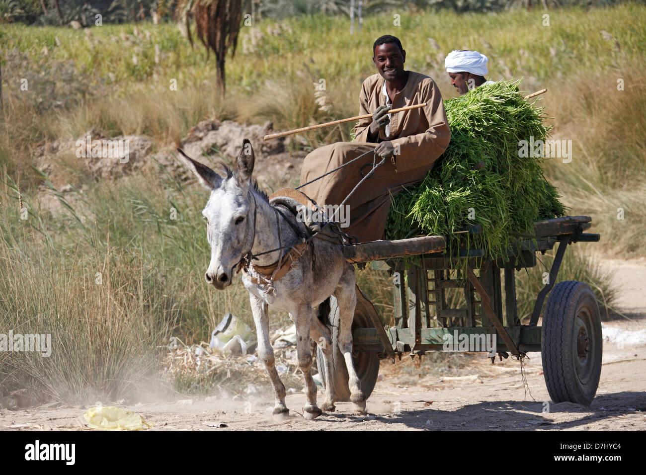 GREY DONKEY & CART WITH GRASS NEAR ASWAN EGYPT 11 January 2013 Stock Photo