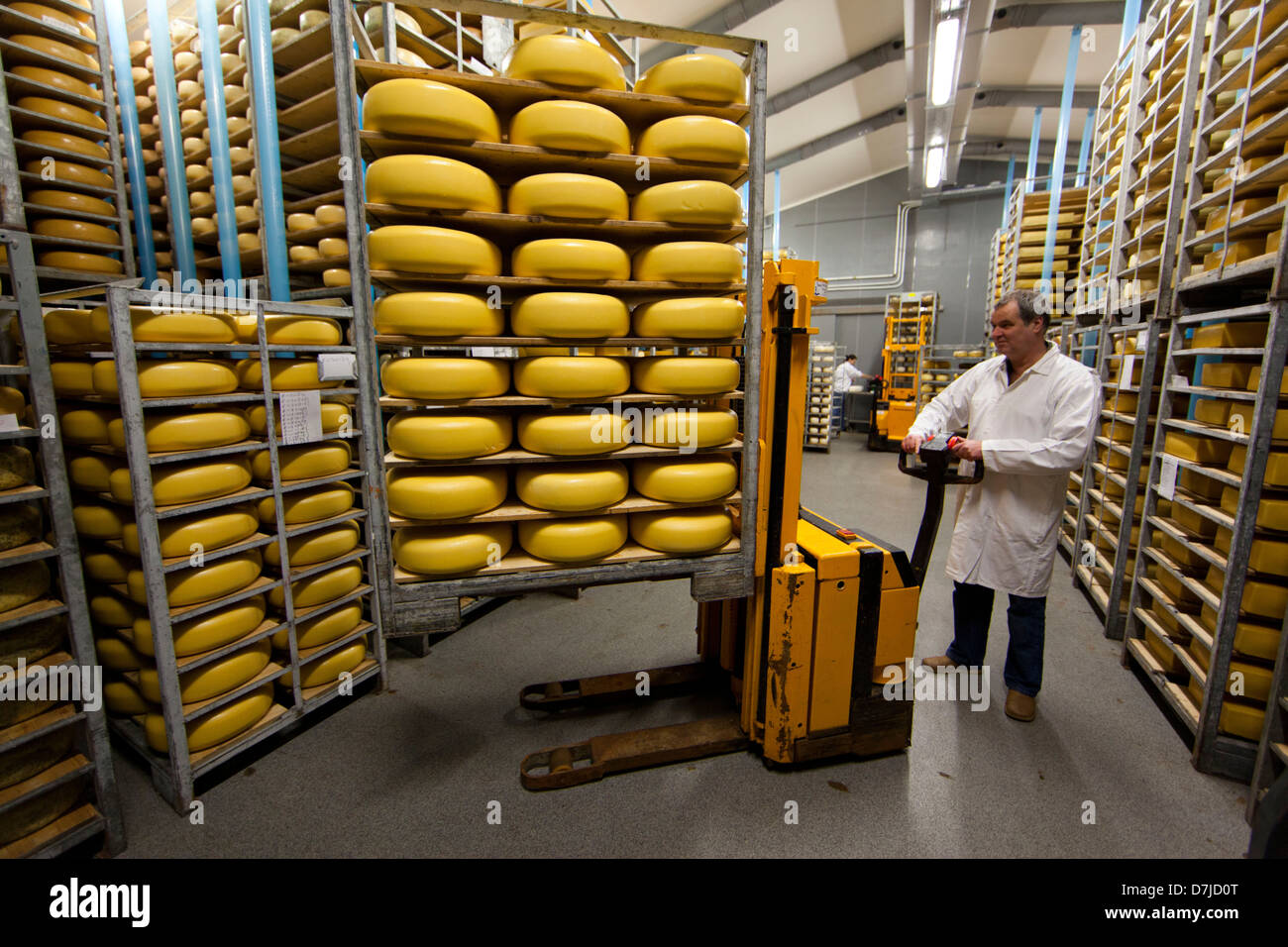 cheese factory in Holland - Stock Image