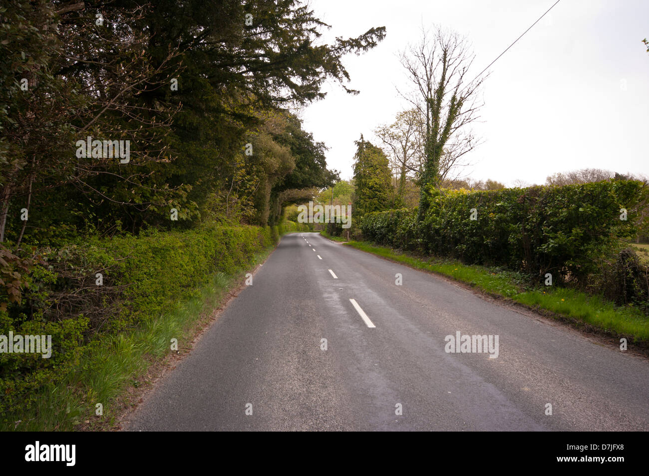 Empty Country Lane With Hedgerows UK - Stock Image
