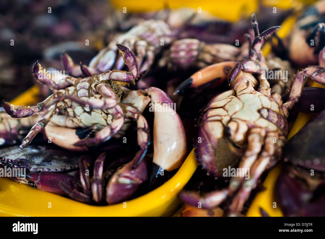 Crabs for sale seen at Chorrillos seafood and fish market in Lima, Peru. Stock Photo