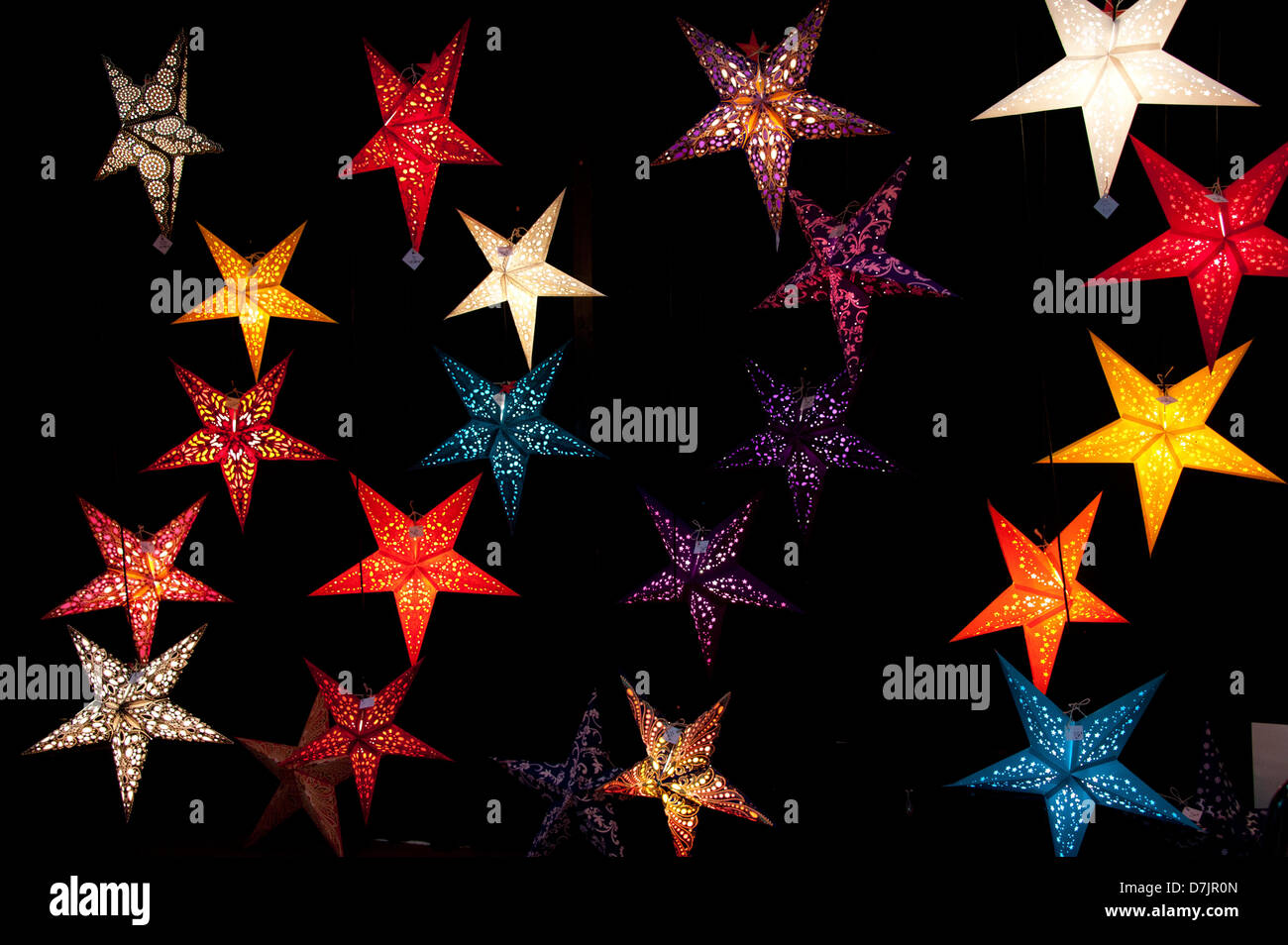 Luminous poinsettias, Leuchtende Weihnachtssterne - Stock Image