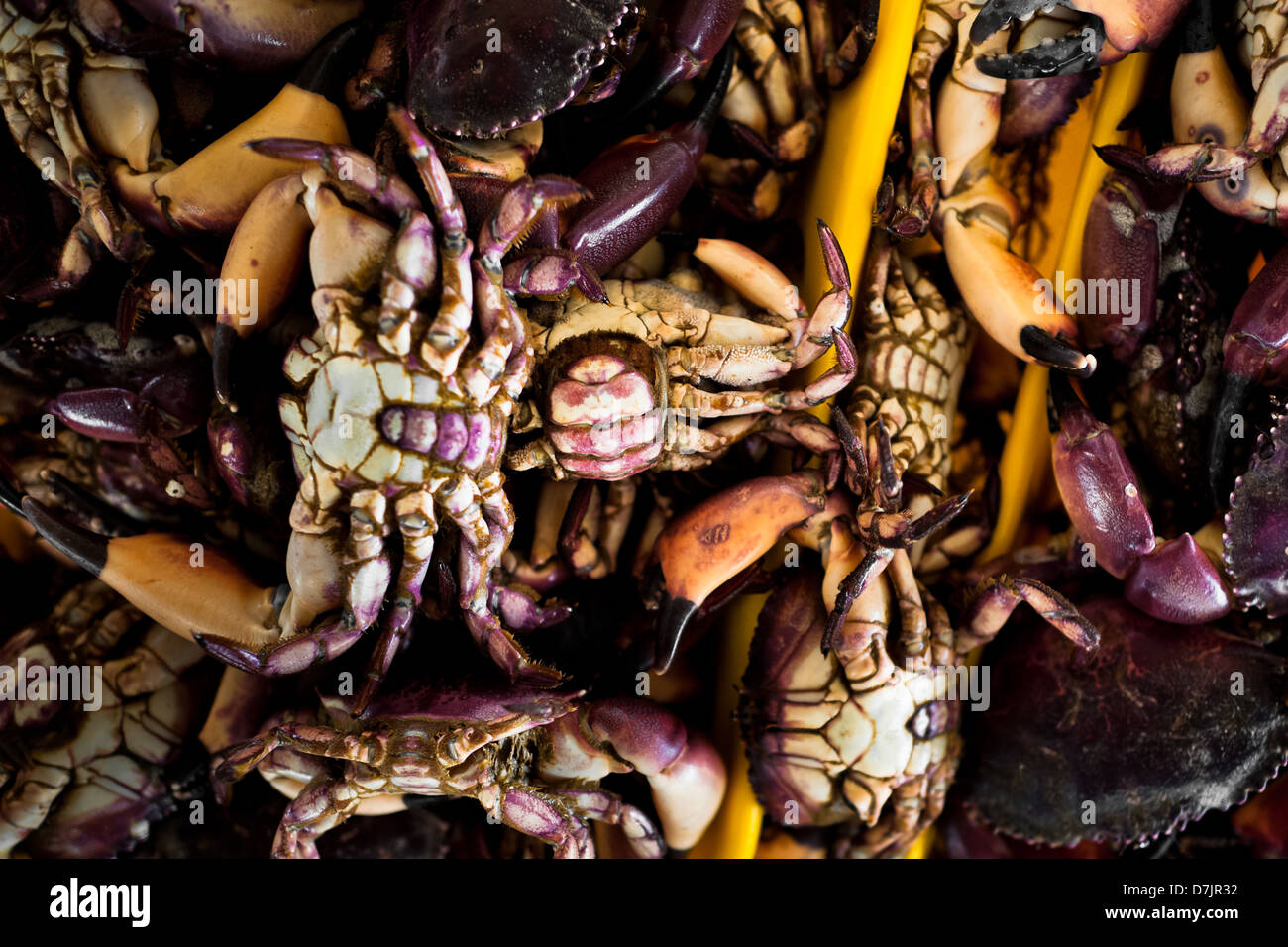 Crabs for sale seen at Chorrillos seafood and fish market in Lima, Peru. - Stock Image