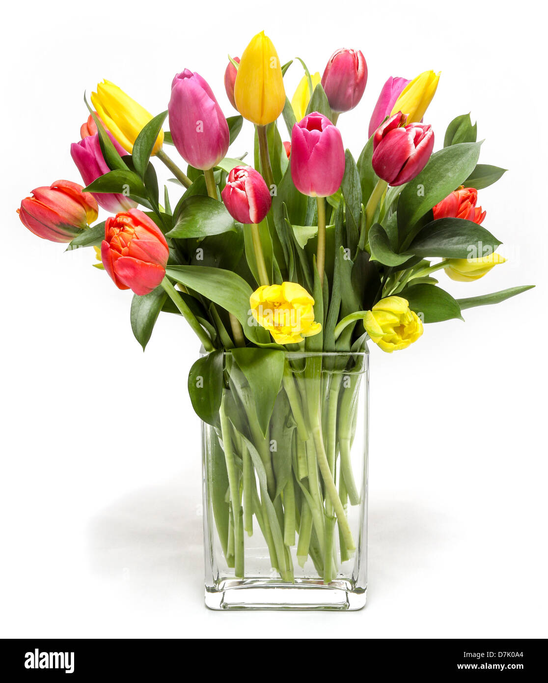 A beautiful flower arrangement of colorful Tulips. Stock Photo